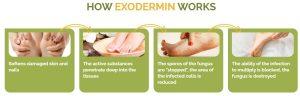 Exodermin Recenzja – walcz z grzybami stóp i paznokci dzięki formule z drzewa herbacianego i masła shea w 2021 roku!